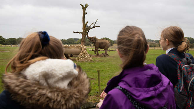 A group of children looking at our Asian elephants at ZSL Whipsnade Zoo