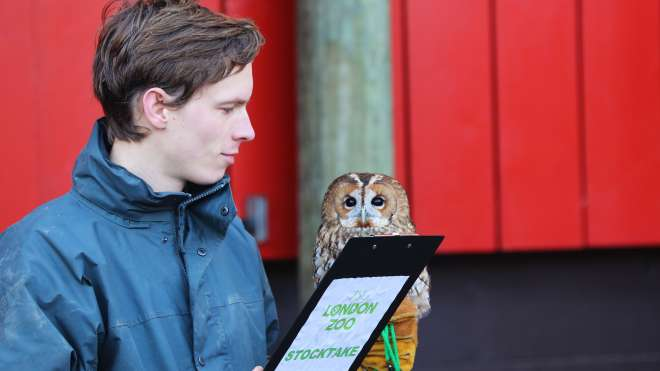Alberta the tawny owl at the 2014 stocktake