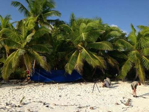 Camping; Vache marine; Chagos; Coconut crabs; rate eradication