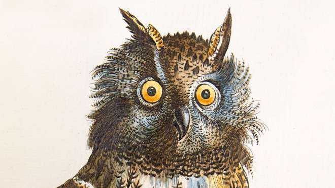 Owl engraving, Bubo maximus Plate LXXXI in Volume 1 of Manetti, 1767-76