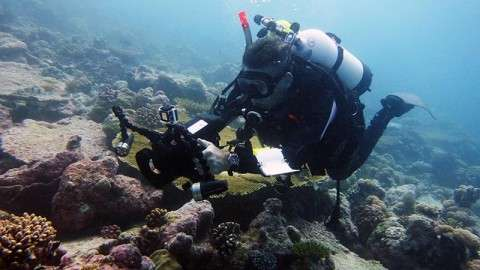John Turner conducting video transects in Chagos