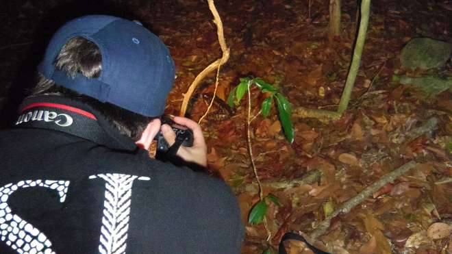 Filming the mountain chicken frogs in Montserrat