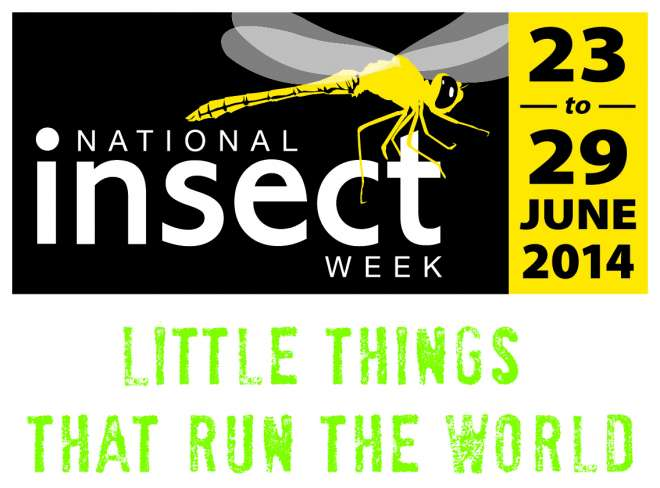National Insect Week