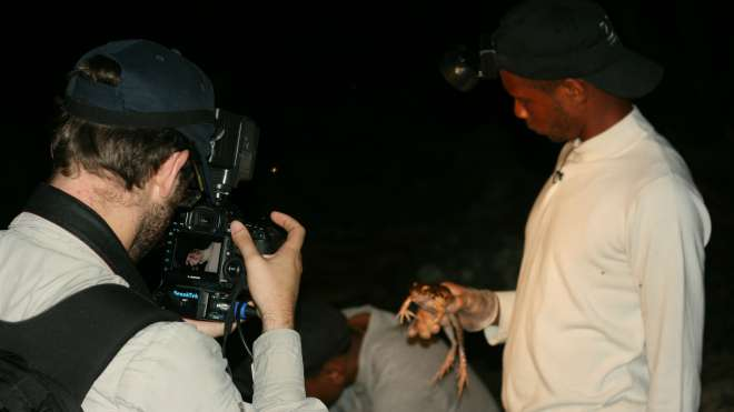Filming a mountain chicken frog during a field survey in Dominica