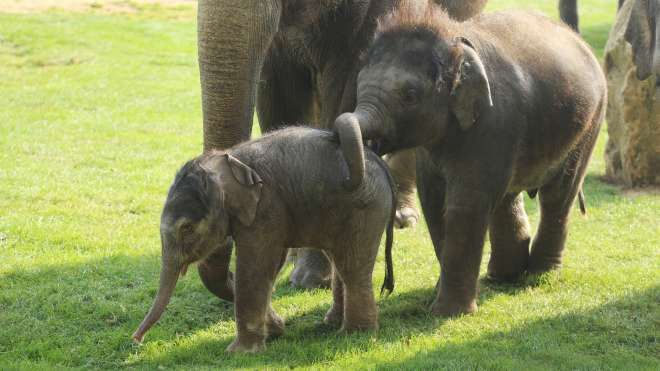 Max and a newborn elephant calf