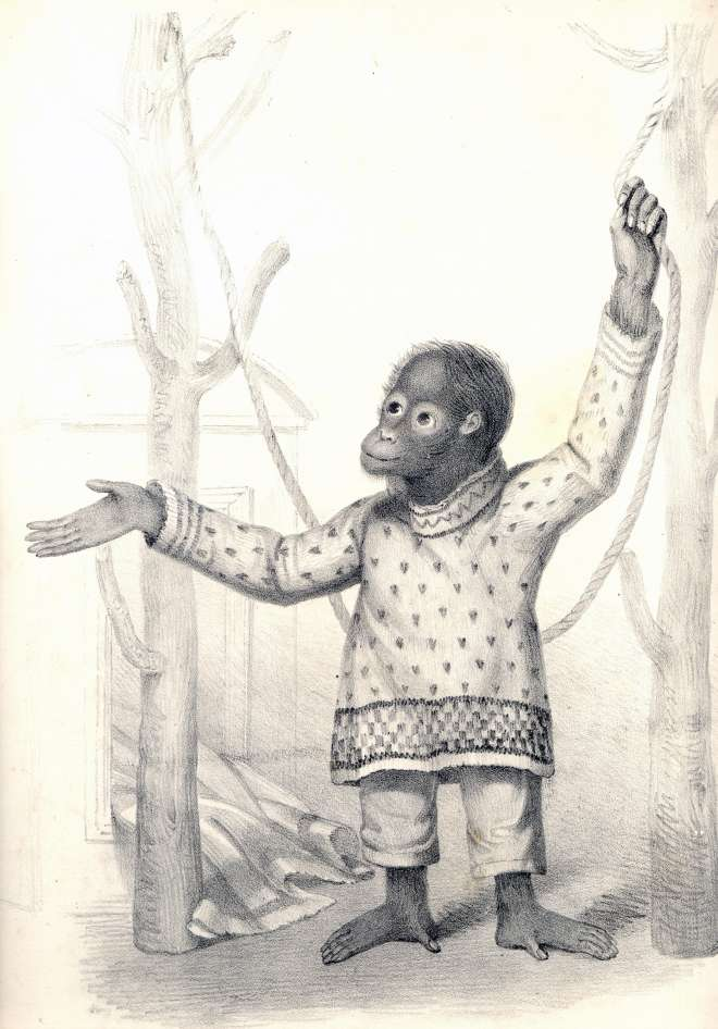 Portrait of Jenny, the first orangutan at London Zoo. Printed by W Clerk, High Holborn, in December 1837.
