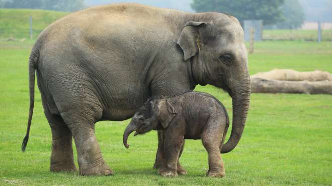 Donna and baby Sam the elephant
