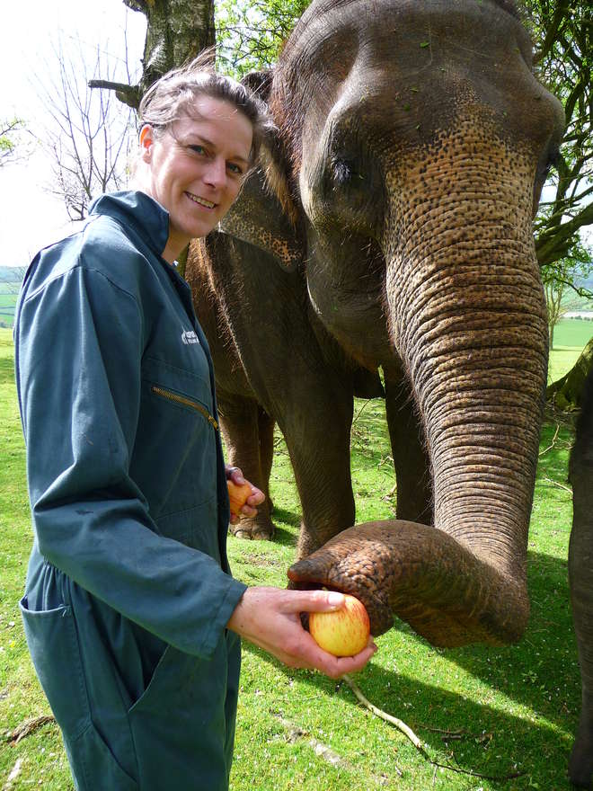 Keeper for a Day Participant at ZSL Whipsnade Zoo with an elephant
