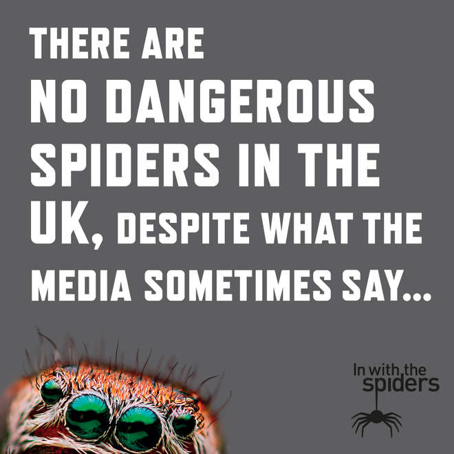 In with the Spiders infographic - there are no dangerous spiders in the UK
