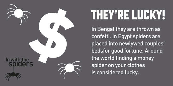 In With The Spiders infographic - Spiders are lucky