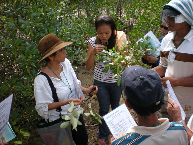 Jurgenne Primavera identifying mangrove species with local communities