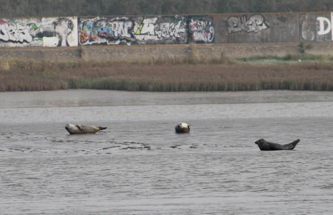 Thames seal by Tim MacQuillin