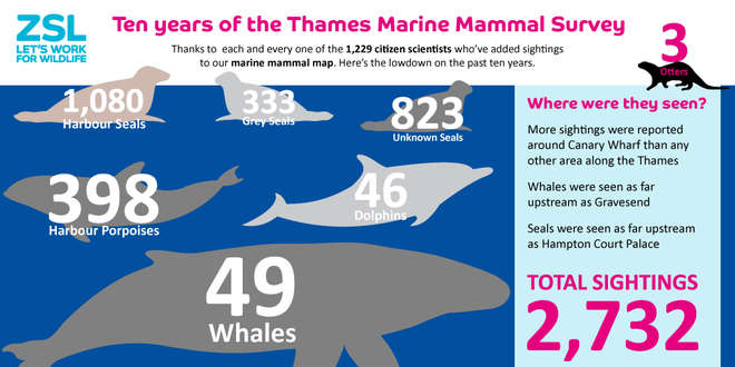 Key numbers from ten year report of Thames Marine Mammal Survey