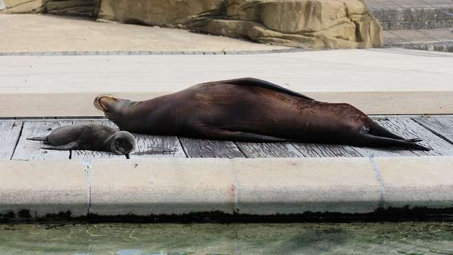 Sea lions having a nap