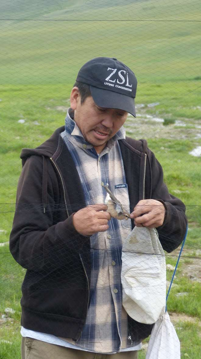 Prof Gombo with a bird on the ZSL Summer Field Course 2015