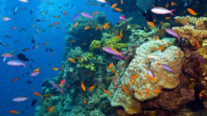 Crisis in global oceans as populations of marine species for How many fish are in the ocean
