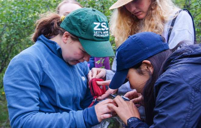 Students measuring a vole on the ZSL Summer Field Course 2015
