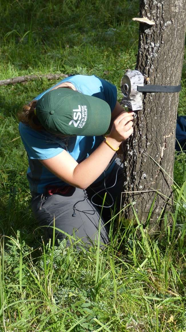 A student sets up a camera trap in the field on the ZSL Mongolia Summer Field course 2015