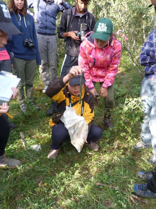 Students weighing a vole on the ZSL Summer Field Course 2015