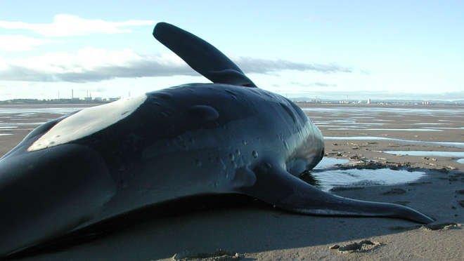 killer whale research paper