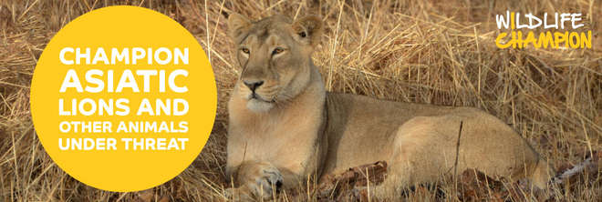 Wildlife Champions - Champion Asiatic Lions