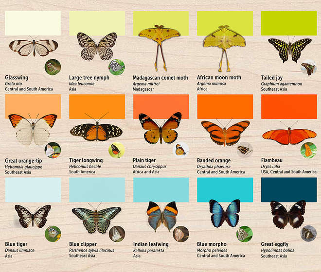 Butterfly House ID Panel Part 1