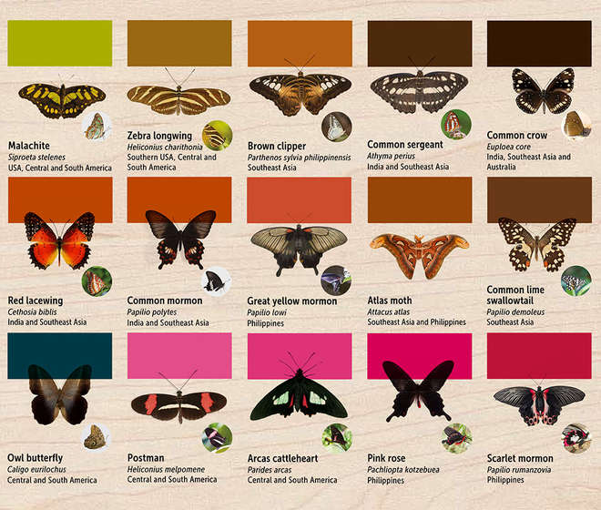 Butterfly House ID Panel Part 2