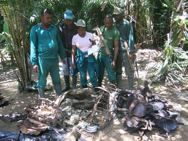 Evidence gathering bushmeat during the antipoaching patrol in Cameroon