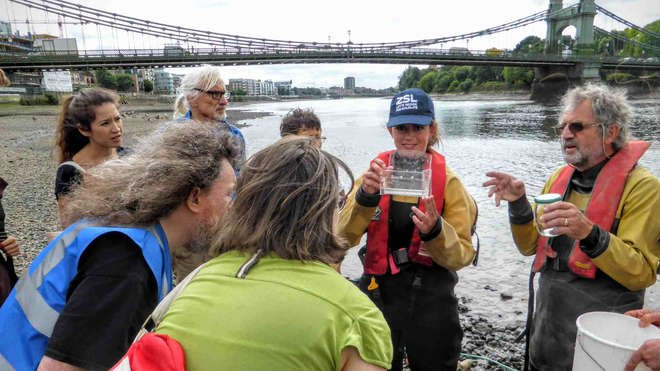 Thames fish conservation