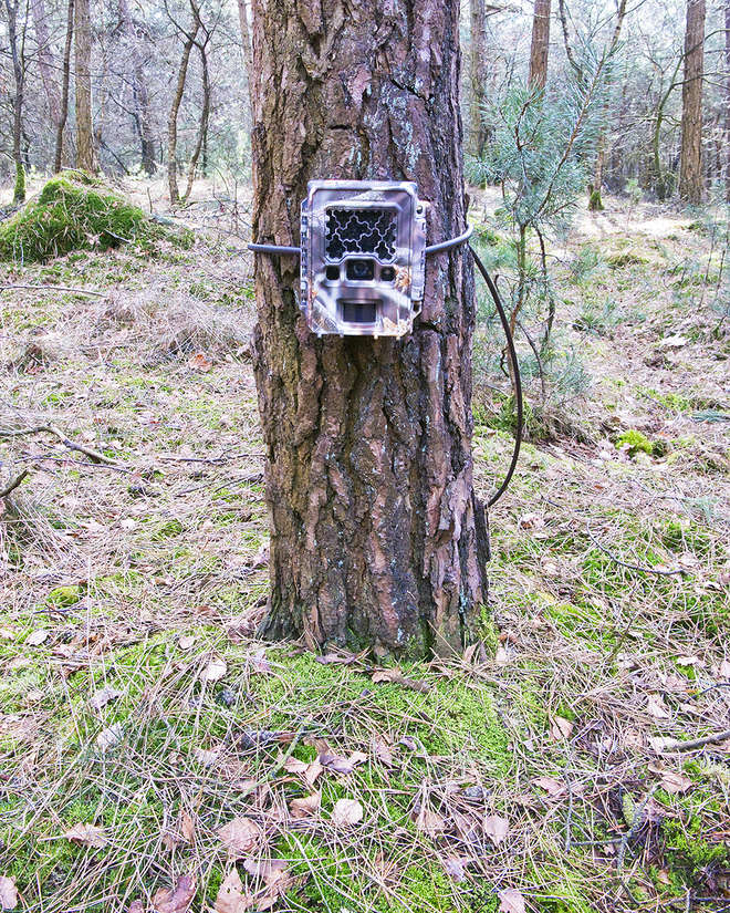 Camera trap set-up. Photo by Tim Hofmeester.
