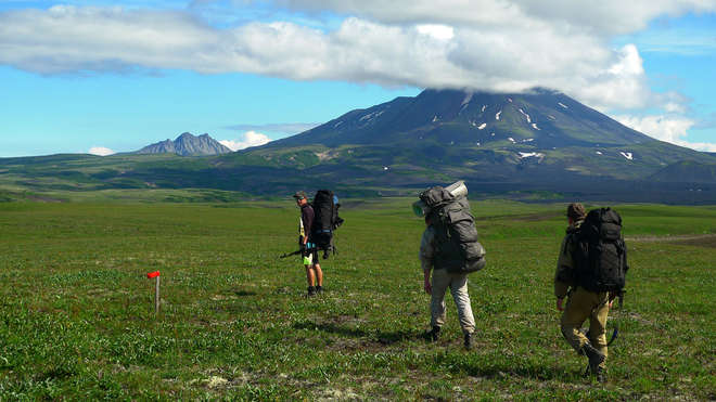 Misha and the team trekked for miles across Kamchatka Peninsula to investigate declining fox populations