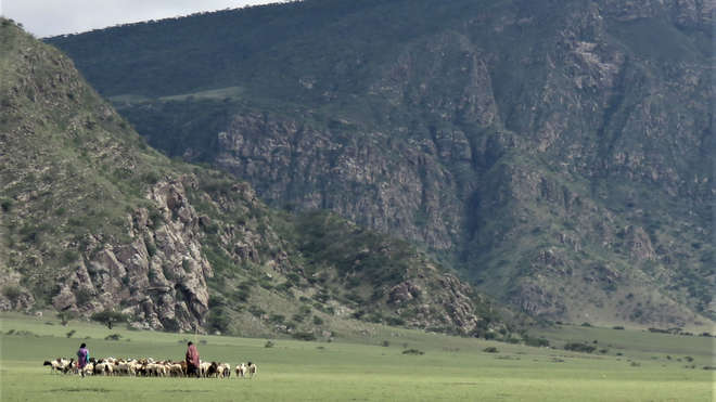 Maasai and sheep