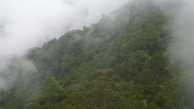The remote rainforests of the Gaoligong mountains, southwest China