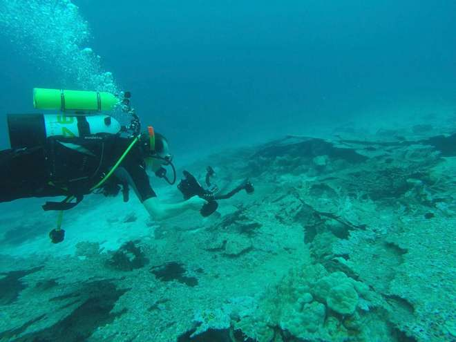 Dead Acropora plates being surveyed in Chagos