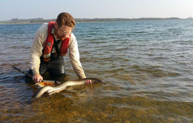 Dr Adam Piper releasing a silver eel back into a reservoir