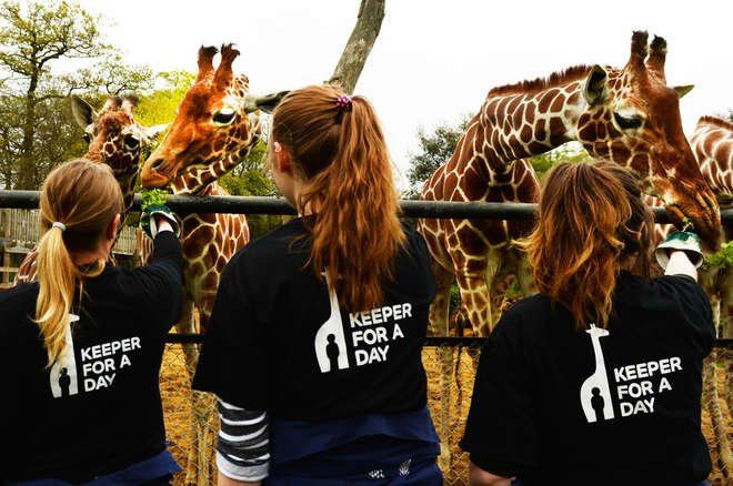 Participants feeding the giraffes