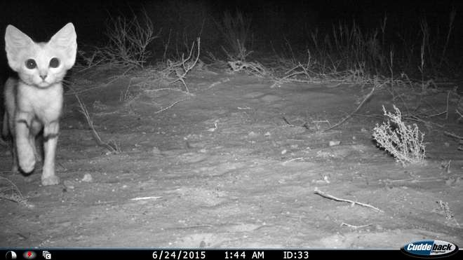 ZSL camera trap data management and analysis package