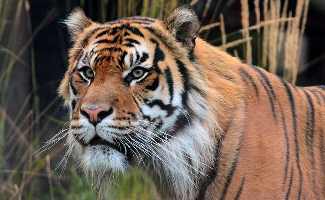 msc in wild animal biology zoological society of london zsl
