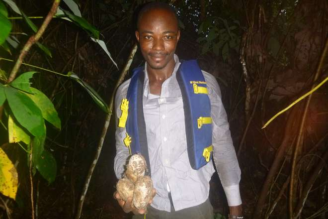 EDGE Fellow Emmanuel Amoah with eggs of West Africa slender-snouted crocodile