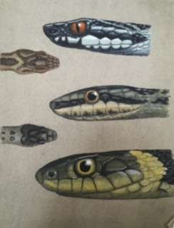 Procter snake painting