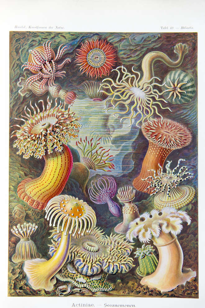Colourful illustration of  sea anemones