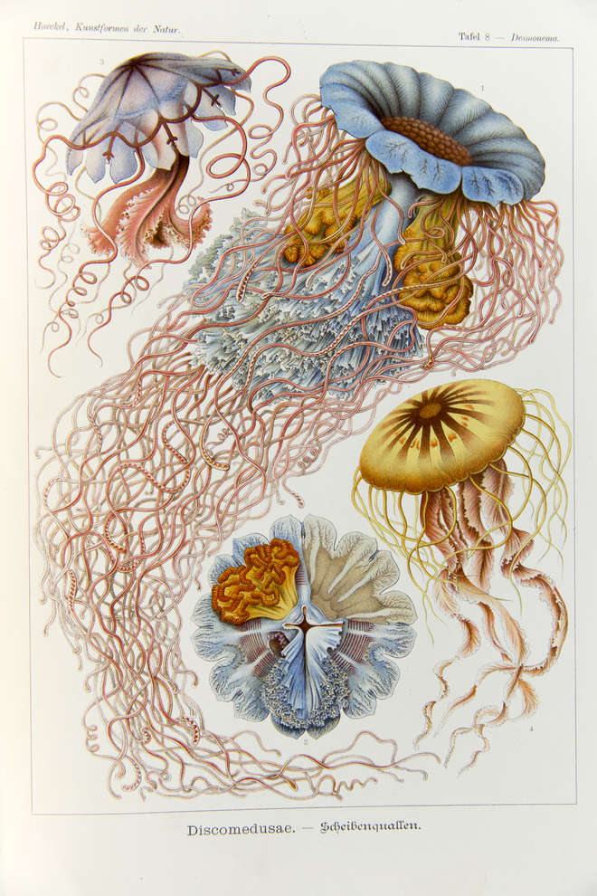 Decorative and colourful illustrations of jellyfish with tentacles draped across the page