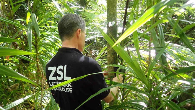 ZSL's Paul Pearce-Kelly reintroducing Partula snails in French Polynesia