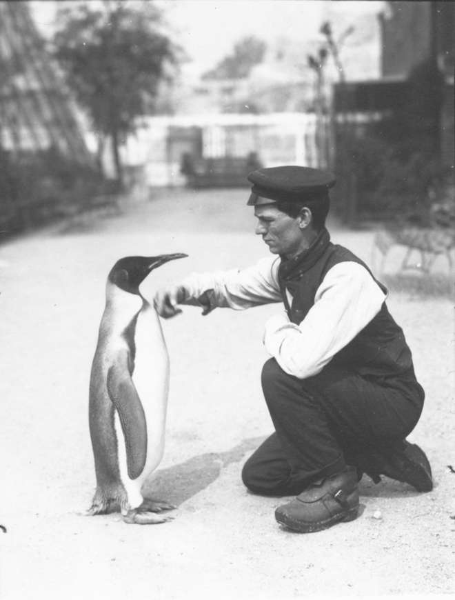 King Penguin, with keeper Harry Munro (1914)