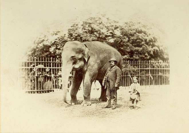 Image by Frank Haes of Jenny the elephant and keeper (1864)