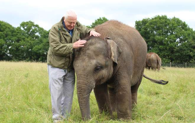 David Attenborough visits our elephant herd at ZSL Whipsnade Zoo