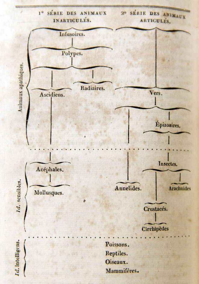 Lamarck's table showing the origins of animals