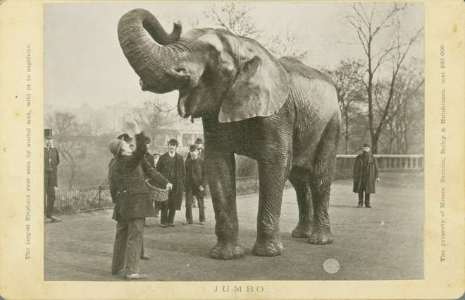 Jumbo was ZSL London Zoo's very first African elephant