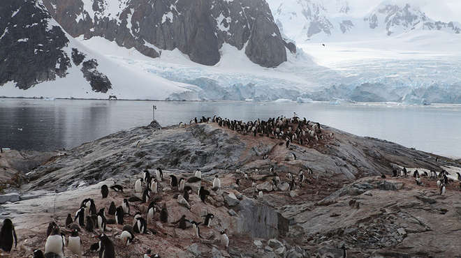 Penguin colony being monitored by a camera trap