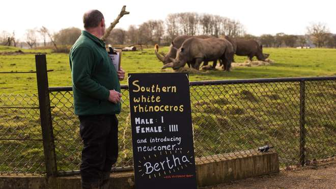 Bertha the white rhino is a new arrival at ZSL Whipsnade Zoo